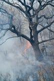 подавление пущи 58 пожаров Стоковые Фотографии RF