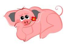 поданная свинья вверх Стоковая Фотография