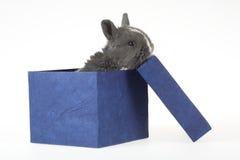 подарок зайчика коробки стоковая фотография