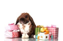 подарок коробок eared lop кролик Стоковое Изображение RF