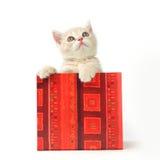 подарок кота коробки Стоковая Фотография RF