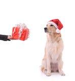 подарок собаки мой Стоковые Изображения
