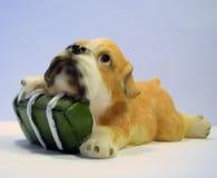 подарок собаки Стоковое фото RF