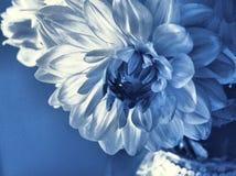 подарок цветка Стоковые Изображения