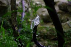 Подача воды от шланга стоковые фото