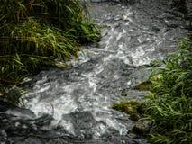 Подача воды реки Стоковая Фотография RF