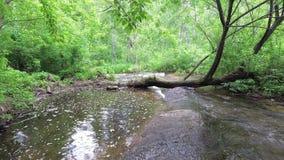 Подачи потока в лес около упаденного дерева сток-видео