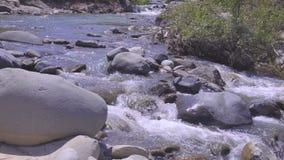 Подачи потока горы до леса 4k видеоматериал