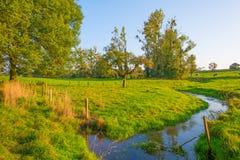 Подачи потока через луг в солнечном свете на падении Стоковые Изображения
