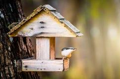 Подают поползневый птицы в фидере птицы с семенами Стоковые Изображения RF