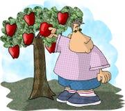 подборщик яблока иллюстрация вектора