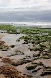подвергли действию риф Стоковые Фото