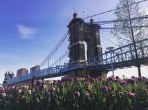 подвес cincinnati john Огайо моста roebling подвес моста roebling Стоковое Фото