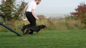 Подвижность спорта собаки