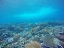 Подводная предпосылка кораллового рифа в Бали Стоковые Изображения