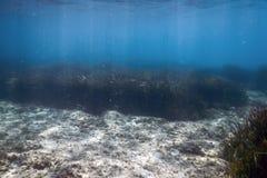 Подводная предпосылка с морской водорослью стоковые фото