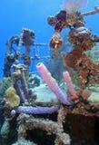 подводная развалина Стоковая Фотография RF
