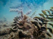 Подводная съемка зеленых морских водорослей или водорослей в побеспокоенных водах стоковая фотография