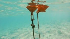 Подводная съемка оранжевого томбуя плавая в море