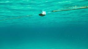 Подводное фото - заплывание к веревочке с томбуем моря, мелководьем  стоковое фото