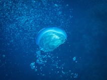 Подводное фото - пузыри большого кислорода бежать к поверхности стоковые фото