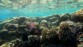 Подводное worldwild в Красном Море, замедленном движении акции видеоматериалы