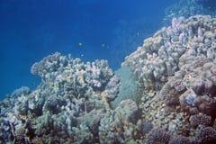 подводно стоковые изображения rf