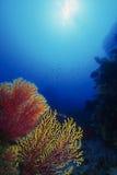 подводно Стоковая Фотография RF