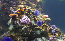 Подводные жизнь и цветы Стоковые Фотографии RF