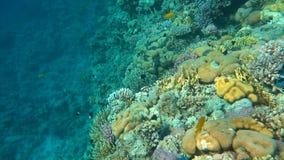 Подводные красочные тропические рыбы и красивые кораллы сток-видео