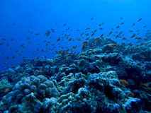 подводный взгляд стоковое фото rf