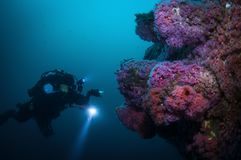 Подводный исследователь фотографируя морскую флору и фауну Стоковое Изображение