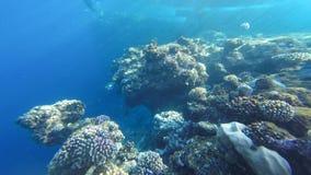 Подводный коралловый риф на Красном Море Стоковое Изображение RF