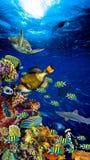 Подводный ландшафт кораллового рифа стоковая фотография rf