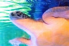 Подводный ландшафт мира, красочный коралловый риф с морским turt стоковое фото