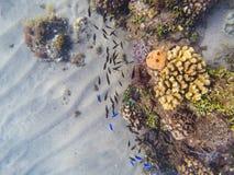 Подводный ландшафт с образованиями коралла и тропическими рыбами Рыбы кораллового рифа обучают около оранжевых и желтых кораллов Стоковое фото RF