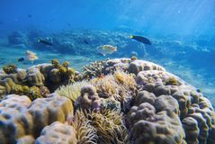 Подводный ландшафт с тропическими рыбами Разнообразные рыбы между кораллами и заводами моря Стоковая Фотография RF
