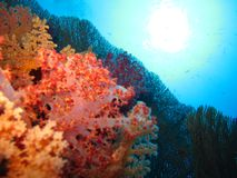 Подводный мир в глубоководье в коралловом рифе и флоре цветков заводов в живой природе голубого мира морских, рыбах, кораллах и т стоковые изображения rf