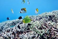 Подводный мир моря южного Китая Стоковые Изображения RF