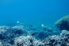 Подводный мир моря южного Китая Стоковое Изображение RF