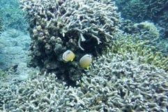 Подводный мир моря южного Китая Стоковое Фото