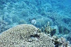 Подводный мир моря южного Китая Стоковые Изображения