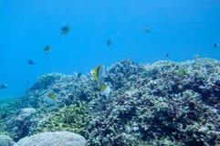 Подводный мир моря южного Китая Стоковые Фотографии RF