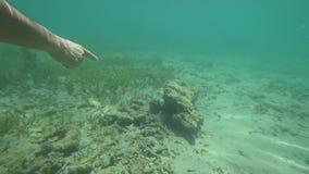 Подводный мир, океан, море, акции видеоматериалы