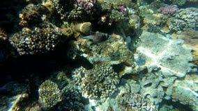 Подводный мир с красочными colral рифом и рыбами видеоматериал