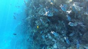 Подводный мир с сериями рыб и красивого кораллового рифа глубоко в море видеоматериал