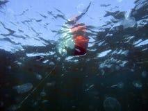 Подводный мир Чёрного моря разнообразен стоковые фото