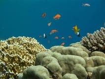 подводный мир Стоковые Фотографии RF