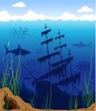 подводный мир Стоковая Фотография