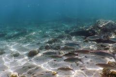 Подводный солнечный свет сцены, удит подводную жизнь стоковая фотография rf